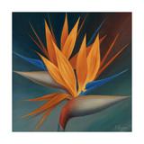 Pájaro del paraíso II Lámina giclée premium por Vivien Rhyan