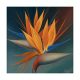 Pájaro del paraíso II Lámina giclée prémium por Vivien Rhyan