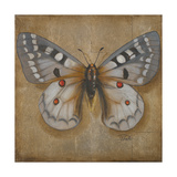 Butterfly II Premium Giclee Print by Patricia Quintero-Pinto