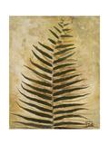 Ferns III Premium Giclee Print by Patricia Quintero-Pinto