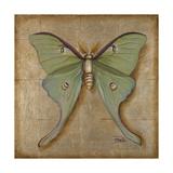 Luna Moth Premium Giclee Print by Patricia Quintero-Pinto