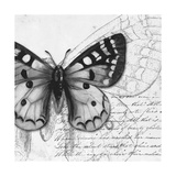 Butterfly Studies I Premium Giclee Print by Patricia Quintero-Pinto