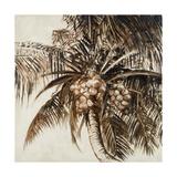 Coconut Palm I Premium Giclee Print by Patricia Quintero-Pinto