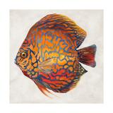 Little Fish II Premium Giclee Print by Patricia Quintero-Pinto