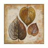 Natural Leaves II Premium Giclee Print by Patricia Quintero-Pinto