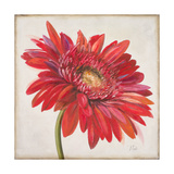 Red Gerber Daisy Premium Giclee Print by Patricia Quintero-Pinto
