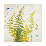Nice Ferns II Premium Giclee Print by Patricia Quintero-Pinto
