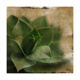 Succulent II Premium Giclee Print by Patricia Quintero-Pinto