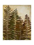 Ferns I Premium Giclee Print by Patricia Quintero-Pinto
