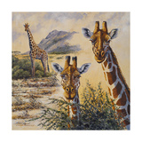 Safari IV Premium Giclee Print by Peter Blackwell
