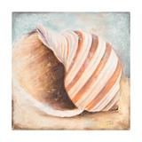 Seashell Collection I Premium Giclee Print by Patricia Quintero-Pinto