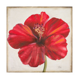 Red Hibiscus Premium Giclee Print by Patricia Quintero-Pinto