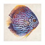 Little Fish I Premium Giclee Print by Patricia Quintero-Pinto