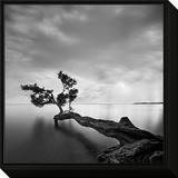 Wasserbaum Framed Print Mount von Moises Levy