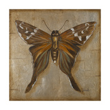 Brown Butterfly Premium Giclee Print by Patricia Quintero-Pinto