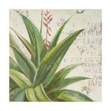 Aloe II Premium Giclee Print by Patricia Quintero-Pinto