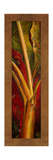 Red Plantain Giclee Print by Patricia Quintero-Pinto