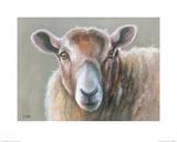 Looking Sheepish Posters par Louise Brown