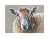 Looking Sheepish Prints by Louise Brown