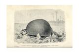 Giant Armadillo, Glyptodon Asper Giclee Print by J. Smit