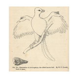 Archaeopteryx Lithographica Giclee Print by J. Smit
