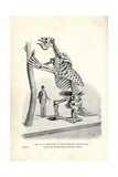 Megatherium Americanum Skeleton Cast Giclee Print by J. Smit
