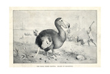 Dodo, Raphus Cucullatus Giclee Print by J. Smit