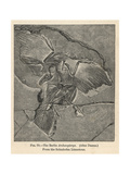 Archaeopteryx Lithographica, Berlin Specimen Giclee Print by J. Smit