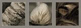 Philip Plisson - Coconut tree Reprodukce
