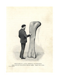 Atlantosaurus Thigh Bone Giclee Print by J. Smit
