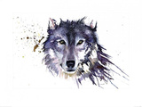 Snow Wolf Art by Sarah Stokes
