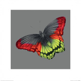 Wild Papillon Print by Louise McNaught