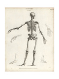 Human Skeleton from the Back Giclee Print by T. Milton