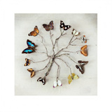 Butterfly Harmony Posters af Ian Winstanley