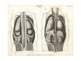 Anatomy of Human Internal Organs from the Back Giclee Print by T. Milton