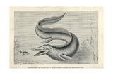 Tylosaurus Proriger Giclee Print by J. Smit