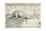 Diplodocus Carnegii Giclee Print by J. Smit