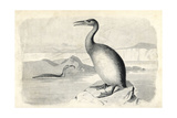 Hesperornis Regalis Giclee Print by J. Smit