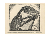 Scaphognathus Crassirostris Skeleton Giclee Print by J. Smit