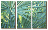 Fan Palm Prints by Suzanne Wilkins