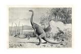 Anchisaurus Polyzelus Giclee Print by J. Smit