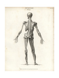 Anatomy of Human Musculature Giclee Print by T. Milton