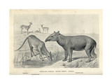 Tapir-Like Animals of the Eocene Giclee Print by J. Smit