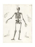 Anatomy of the Human Skeleton Giclee Print by T. Milton
