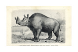 Brontops Robustus Giclee Print by J. Smit