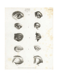 Anatomy of the Human Eye Giclee Print by T. Milton