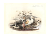 White Dodo and Red-Breasted Goose Giclee Print by J. Smit