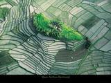 Yann Arthus-Bertrand - Ilot dans les rizières en terasse de Bali Reprodukce