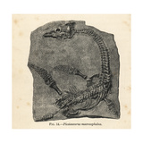 Plesiosaurus Macrocephalus Fossil Skeleton Giclee Print by J. Smit