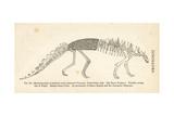 Polacanthus Foxii Skeleton Giclee Print by J. Smit